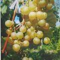 zolotoj-potapenko-5149965
