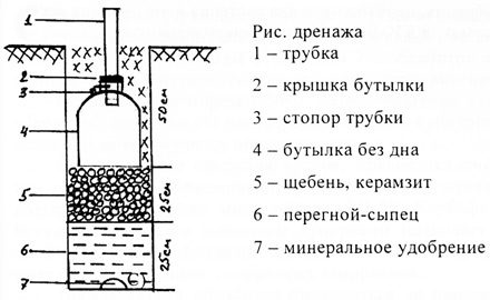 poliv-vinograda-drenag-sxema-1928908